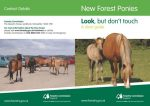 FC New Forest Ponies