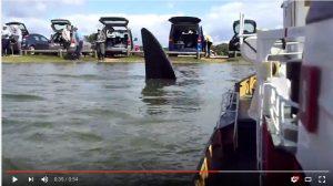Jaws: Setley Shock
