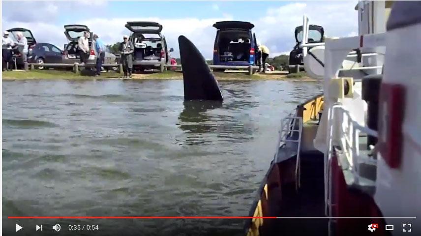 Jaws - Setley Shock