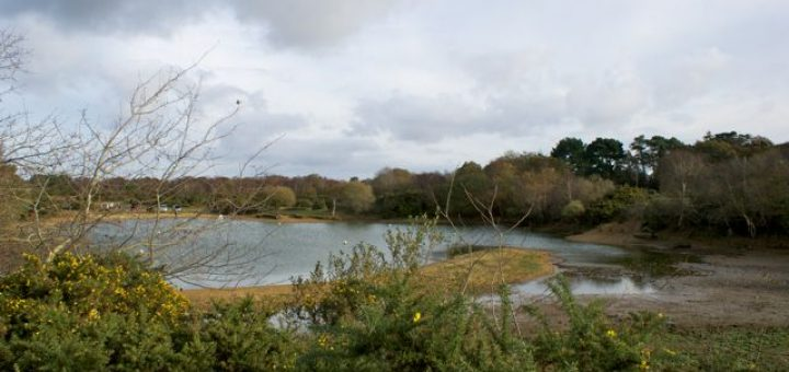 View of Setley Pond