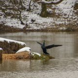 The Pond on Sunday!