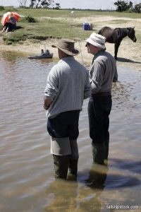Setley Pond 03 Jun 2018 BLW 401 ©tallshipstock resize