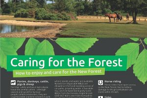 Caring for the Forest
