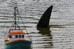 RC Shark's fin