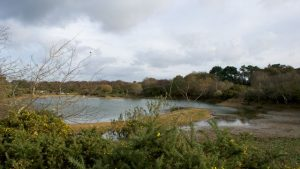 Looking towards the car park after a dry summer