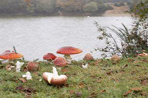 Autumn fungi (November 2007)