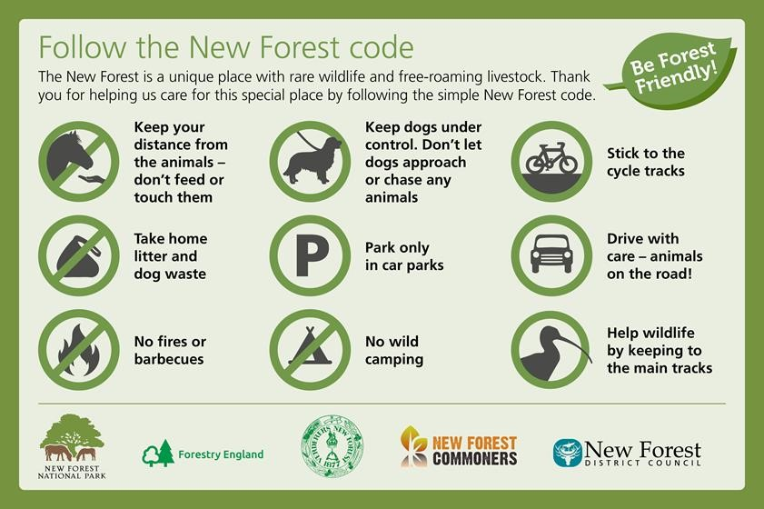 Forest Safety