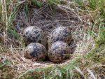ground birds nest